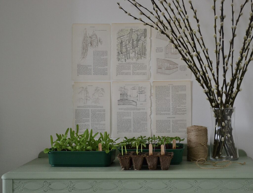 A sage green table top, with new plants growing out of nursery dishes. On the wall behind are 6 pages from a vintage plant growth book. Peeking in the frame to the right is a vase of tall stick-like plants without leaves. The colours are natural and muted, creating a relaxed feel.